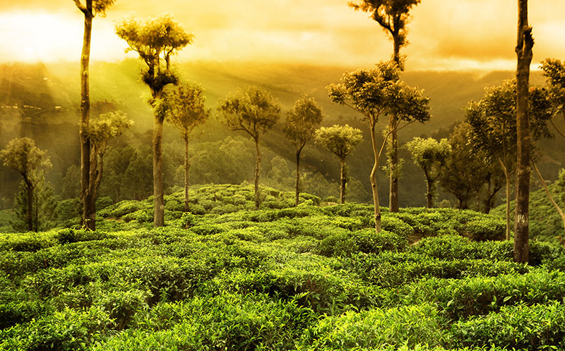 Best tour packages to wayanad