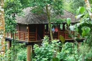 Carmelia Haven Tree house- THEKKADY