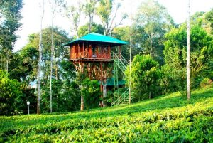 Dream Catcher Plantation Resort –MUNNAR
