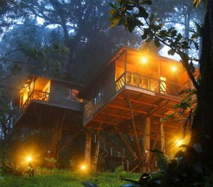 Nature Zone Jungle Resort – MUNNAR