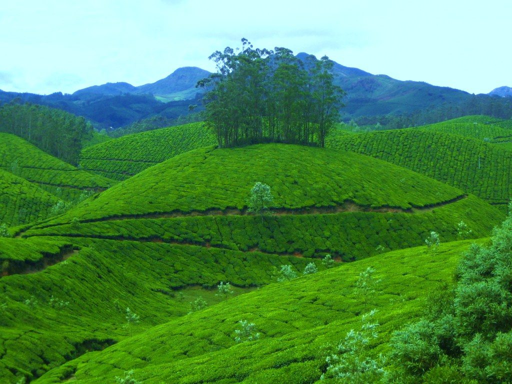 Kerala package for groups